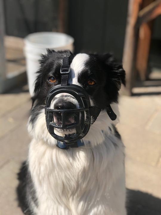 Comment arriver à parfaire le dressage de son chien de maison ?